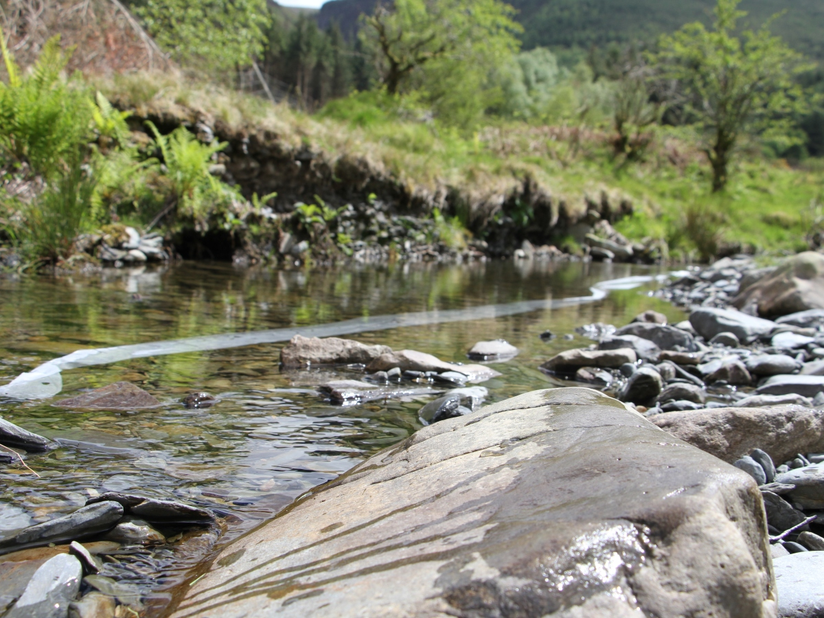 A wild stream with rocks and pebbles in the foreground, and a green bank beyond the water. In the stream, under the water, is a long strip of paper that might have writing on it.